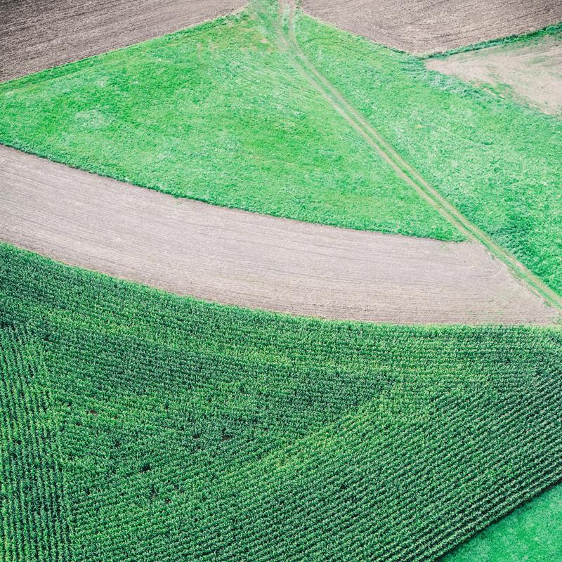 cover-crop